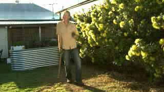 The Garden Gurus - What to Do in Queensland