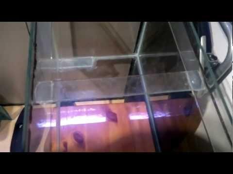 123. How To Repair A Cracked Aquarium / Tank