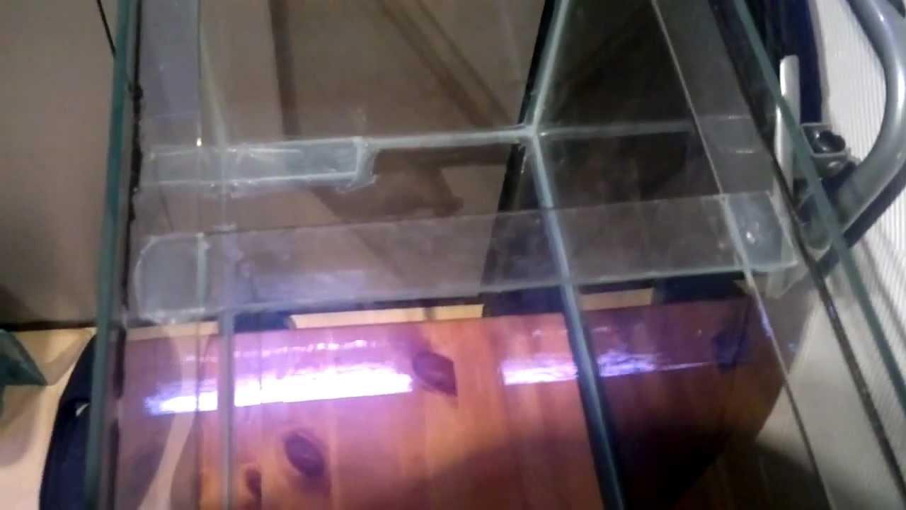 Fish aquarium repair - How To Repair A Cracked Aquarium Tank