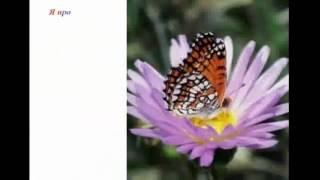 ИЛЬЯ ШУБИН | Урок бабочки