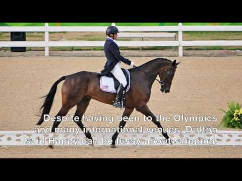 Meet the US Equestrian Team&39;s Mighty Nice