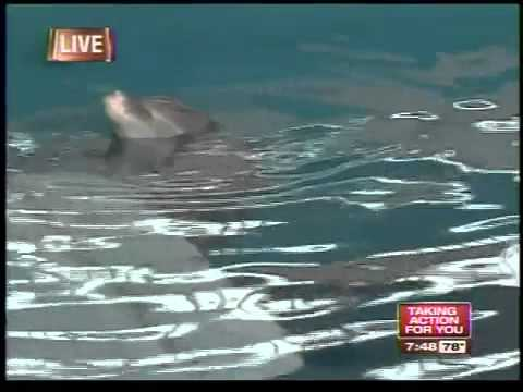 Sean Daly live from Clearwater Marine Aquarium