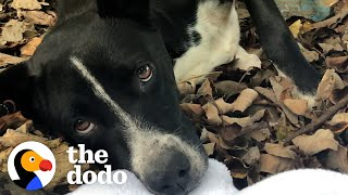 People Find A Dog And Her Puppies In The Middle Of The Woods | The Dodo Foster Diaries