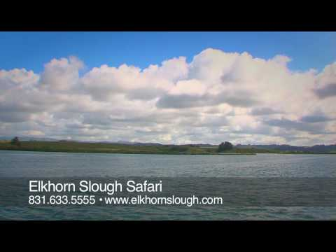 Elkhorn Slough Safari from YouTube · Duration:  1 minutes 34 seconds