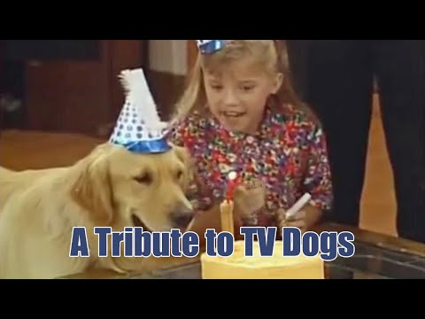 A Tribute to TV Dogs
