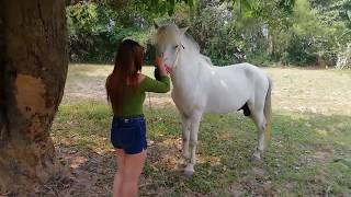 Amazing Beautiful Girl Cleaning A Horse at Horse Garden #1