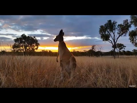 Top Tips For Travel To Australia With Flight Centre