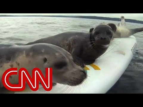 Sea lions try to catch free rides