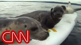 Sea lions try to catch free rides thumbnail