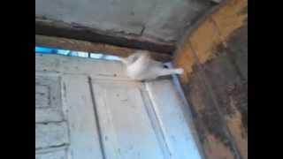 Кошка сама открывает дверь!