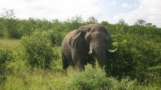 Kruger National Park (South Africa) [IGEO.TV]