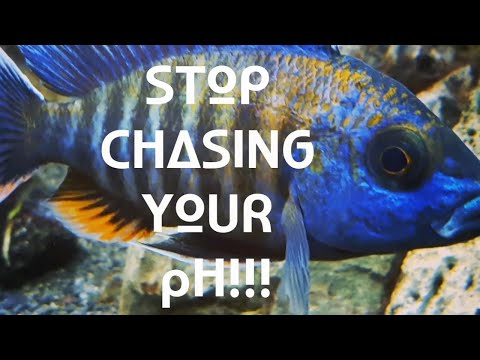 STOP CHASING PH!  Fish Tank PH Tips For Healthy Fish.