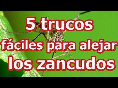 5 trucos fáciles para alejar los zancudos