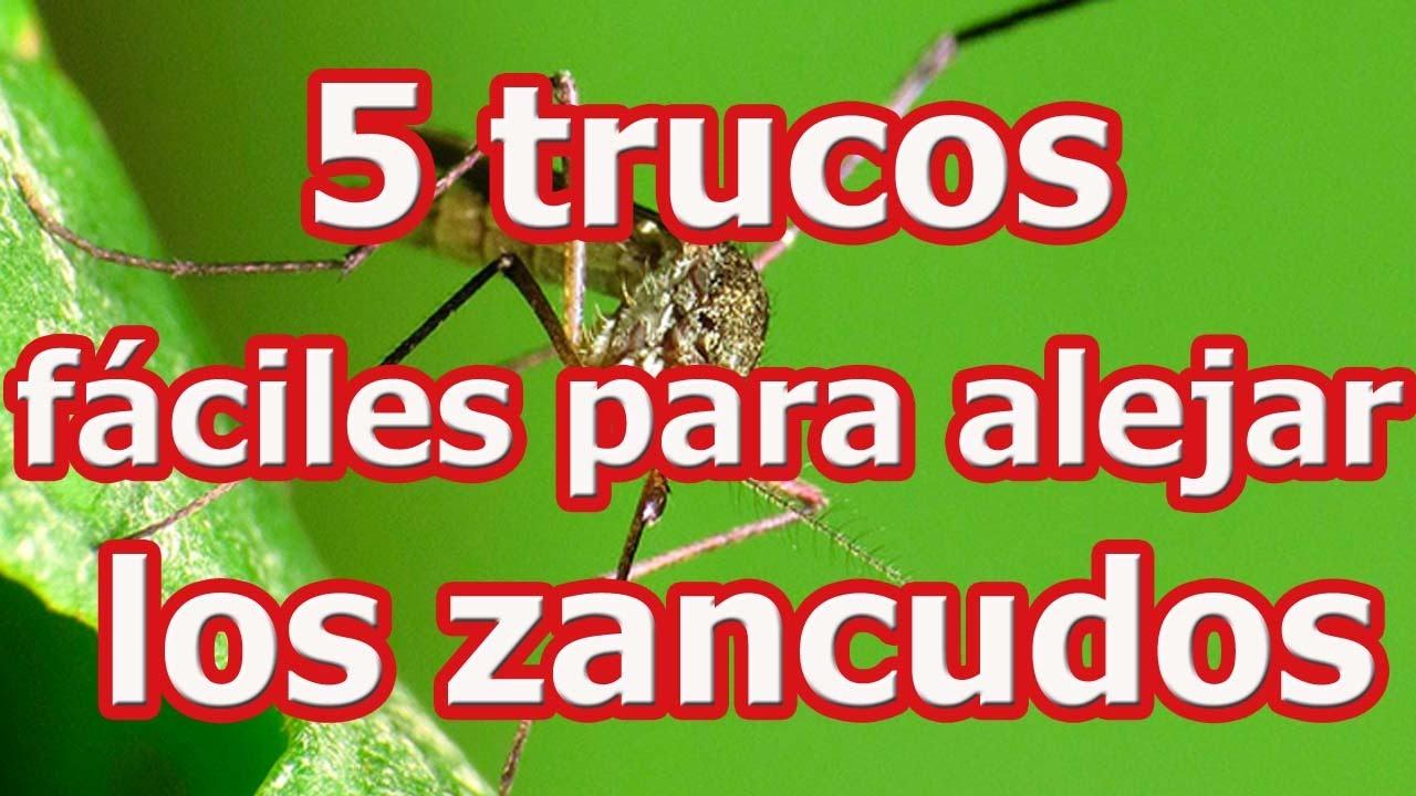 5 trucos f ciles para alejar los zancudos youtube - Como ahuyentar mosquitos ...