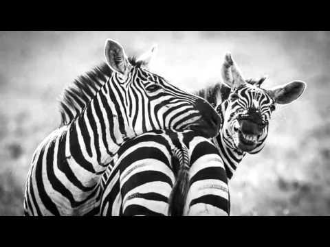 Mix Gabon and Afro Goove 2015 1hours non stop by Jason Bitteschôn