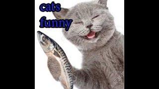 chó mèo hài hước dễ thương cute hot nhất tuần qua | cats tv