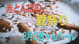 赤とんぼ8月のきゃんぺーん紹介動画