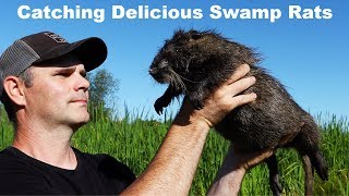 Nutria - Catching Delicious Swamp Rats. Mousetrap Monday