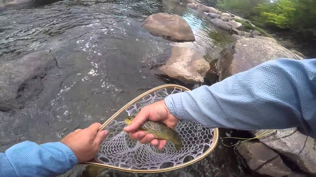 Adirondack fly fishing august 2015 west branch ausable for Ausable river fishing report