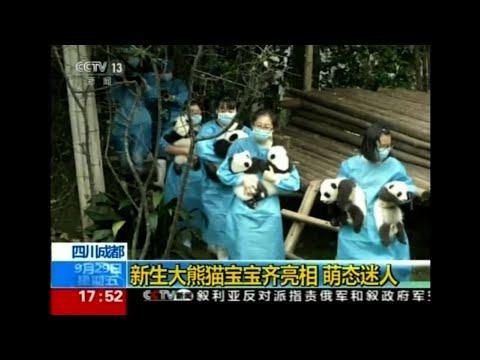 10 Giant Panda Cubs Make Public Debut in China