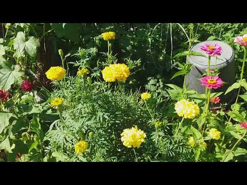 Желтый шар  #желтый_шар #цветы