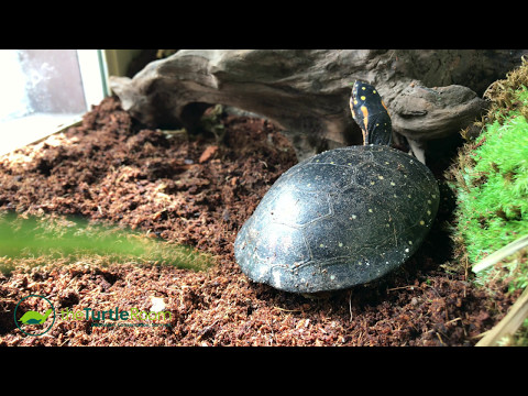 Spotted Turtle Breeding Program
