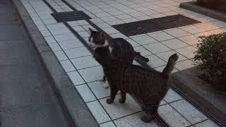 芝公園にいるネコちゃんです! 東京タワーに行ったらついでに会いに行っ...