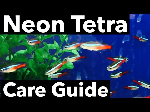 Neon Tetra Care - Dying Issue? Tank Mates?