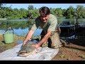 25 kg-os Tisza-tavi harcsa – C&R