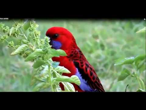 Wildlife Videos Beautiful Animals And Birds Of Nature Youtube