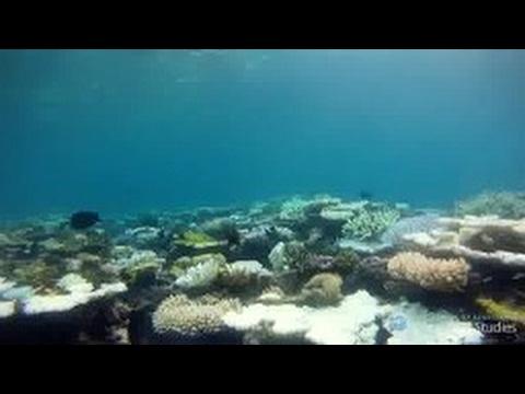 Great Barrier Reef Coral Reef Bleaching