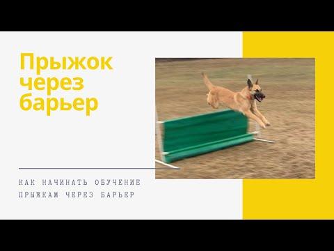 Вопрос: Как научить собаку прыгать?