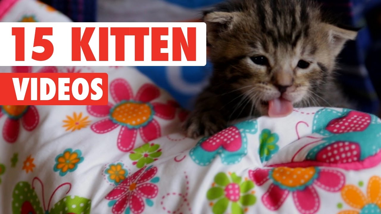 15 Funny Kitten Videos Compilation 2016