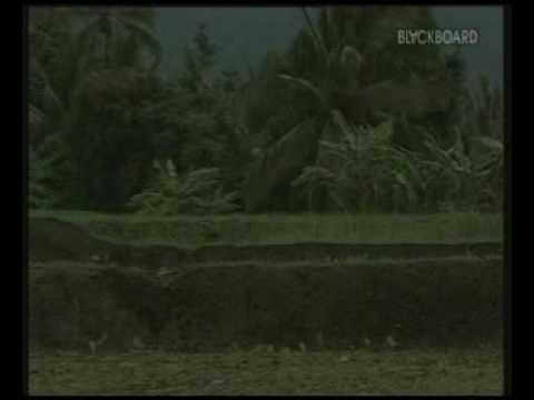 Evie Tamala-Uthak Uthak Ugel