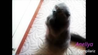 Танцующие кошки)))Прикол:)))