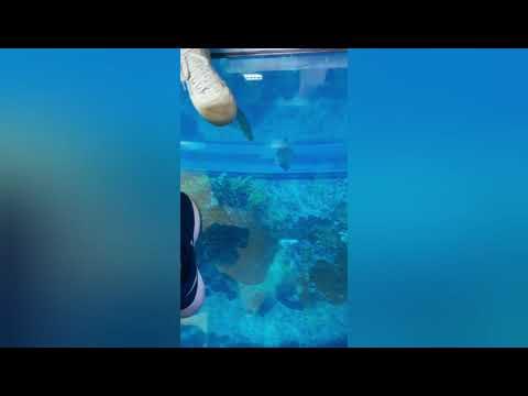 Dubai aquarium visit 2019 awesome