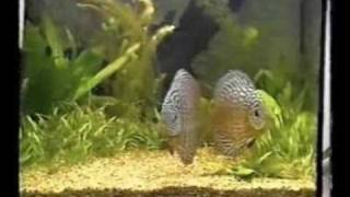 Аквариум, болезни рыбок. Часть 4.