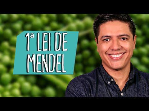 1ª LEI DE MENDEL  - Genética - Prof. Kennedy Ramos