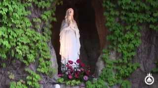 CDR Convegno-Pellegrinaggio 2014: Clip di Domenica, piazza San Pietro, Basilica e processione.