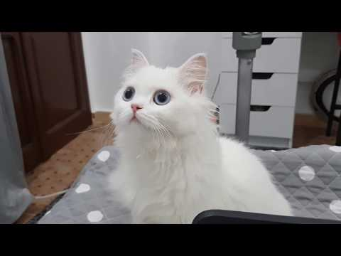 | My Cat React to cats sounds