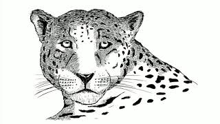 JamesCorbettPhotography: Drawing a Jaguar