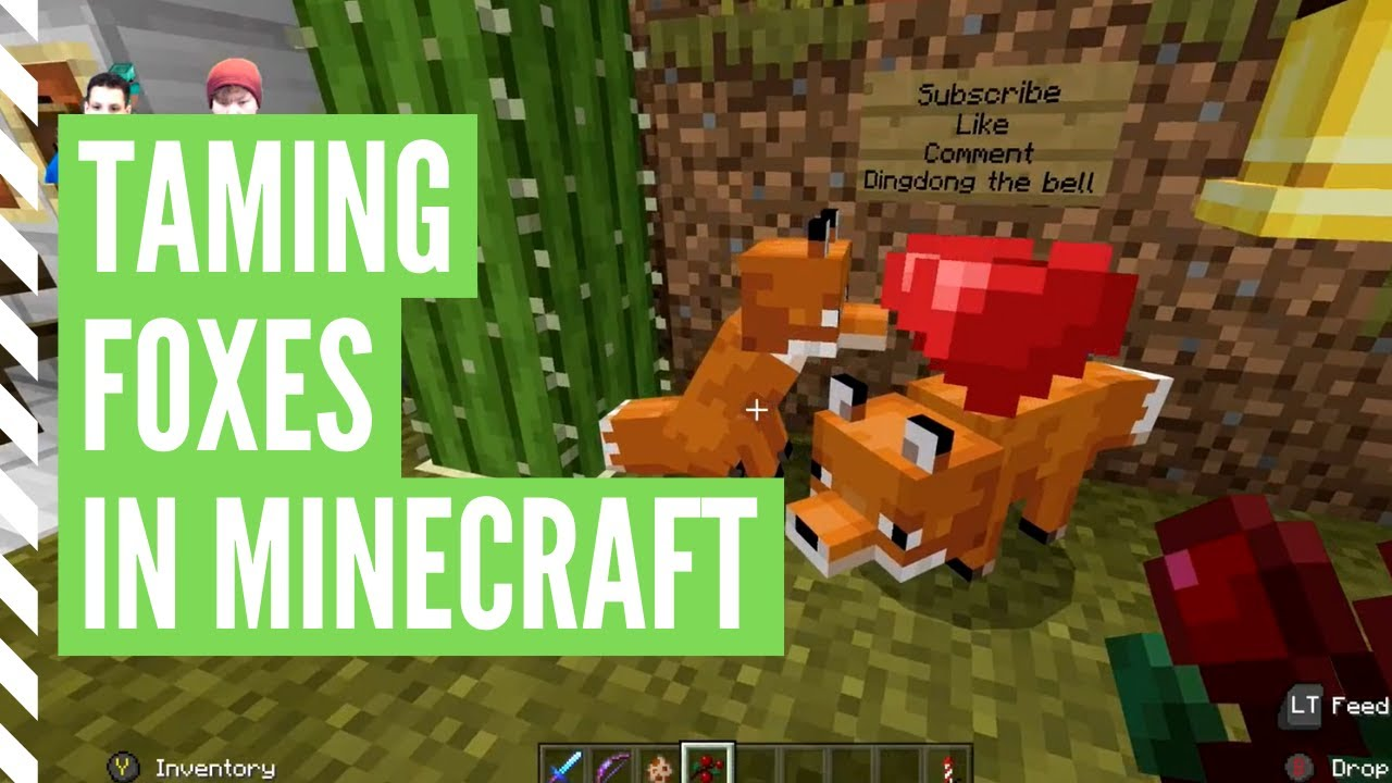 How To TAME A FOX In Minecraft (And BREED Foxes)