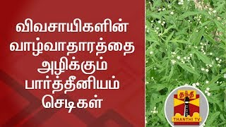 விவசாயிகளின் வாழ்வாதாரத்தை அழிக்கும் பார்த்தீனியம் செடிகள் | Thanthi TV