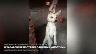В Хабаровске поставят памятник животным