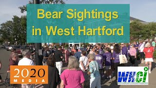 Bear Sightings in West Hartford: WEHA Bear Fair - Bears Created by Artists & Benefiting Non-Profits