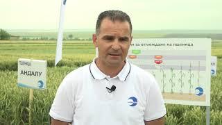 Открит ден на Суммит Агро в с. Странско - сортове пшеница