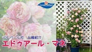 エドゥアール・マネ【デルバール品種紹介】