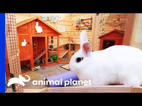 Incredible Bunny Beach House Completely Transforms This Backyard | Animal Cribs