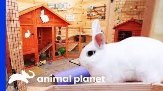 Incredible Bunny Beach House Completely Transforms This Backyard | Animal Cribs