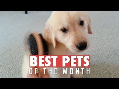 Best Pets of the Month | February 2018